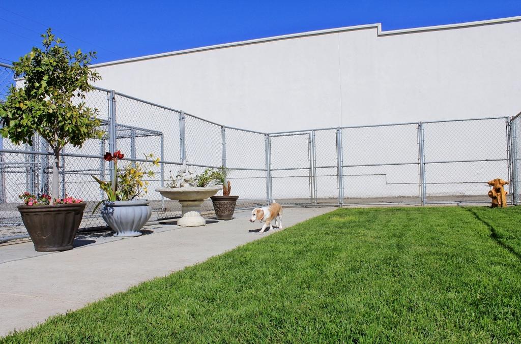 Boarding Boulevard Animal Hospital Garden Grove Ca