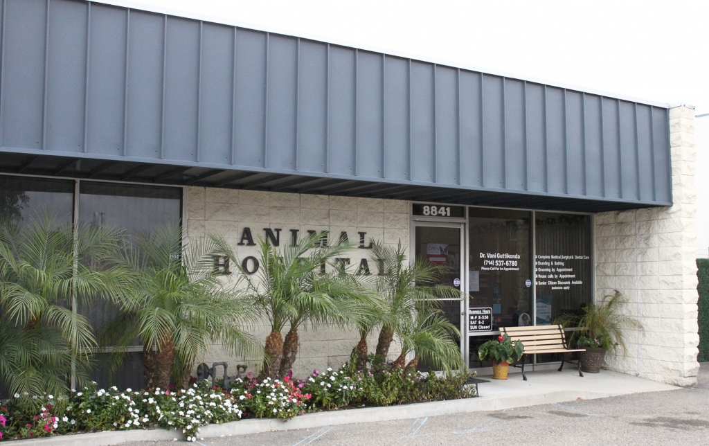 Amazing Boulevard Animal Hospital Garden Grove Great Pictures