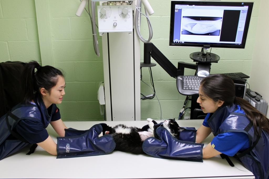 Imaging services boulevard animal hospital garden - Garden grove dog and cat hospital ...